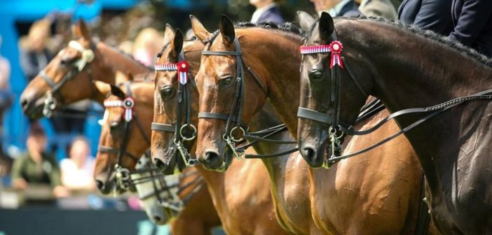 Hickstead heralds a new dawn as Al Shira'aa take on sponsorship of the Derby